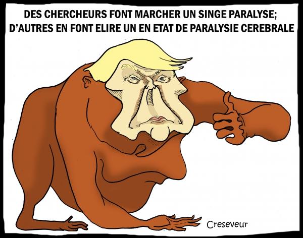 Un singe élu aux usa.jpg