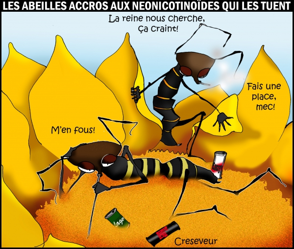 Les abeilles accros aux néonicotinoïdes.JPG